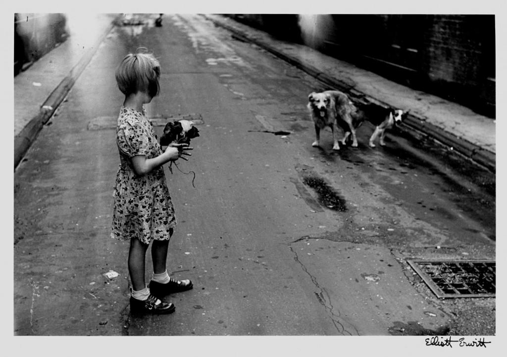 """""""DOGS IN A STREET"""" BY ELLIOTT ERWITT"""